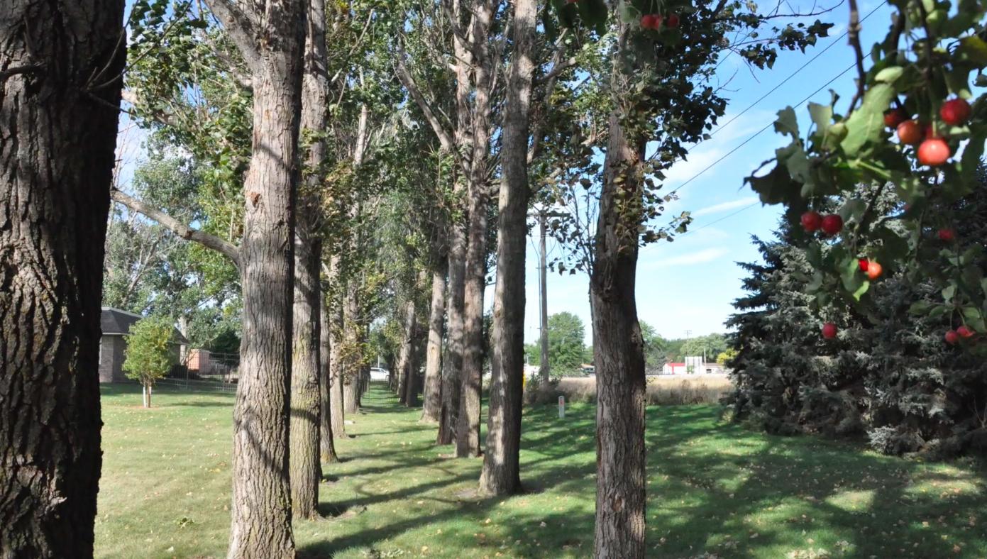 Legacy Garden trees