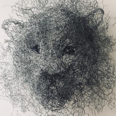 Lion, 2017