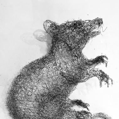 Rat, 2016