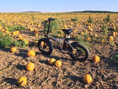 Find my pumpkin!