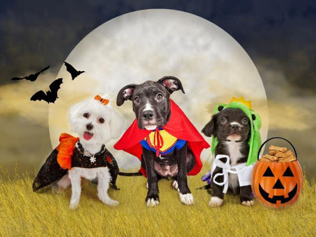 Virtual Monster Mash Puppy Shuffle on October 17th from 9am-6pm