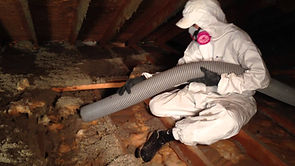 Rodent Proofing Pest Control Oakland CA | BGreen - Pro Attic Cleaning