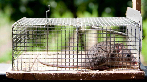 Rodent Proofing Services San Jose, CA