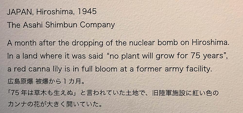 HIROSIMA 広島原発後にさく赤いカンナの花 写真展 戦争と花 東信