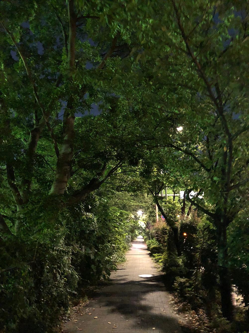 緑のトンネル。満月の夜の散歩道のブログ。都会で鈴虫の鳴く道。