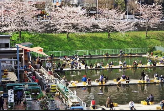 市ヶ谷の釣り堀と桜。グルメ情報も満載のブログ
