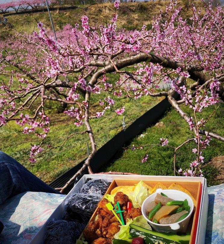 桃の花畑でランチ!インテリアコーディネーターのブログ。