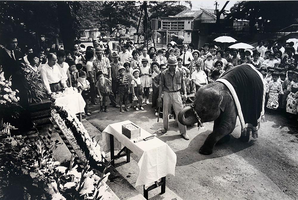 上野動物園での慰霊祭  Photo Exhibition war and flowers 戦争と花 写真展 象