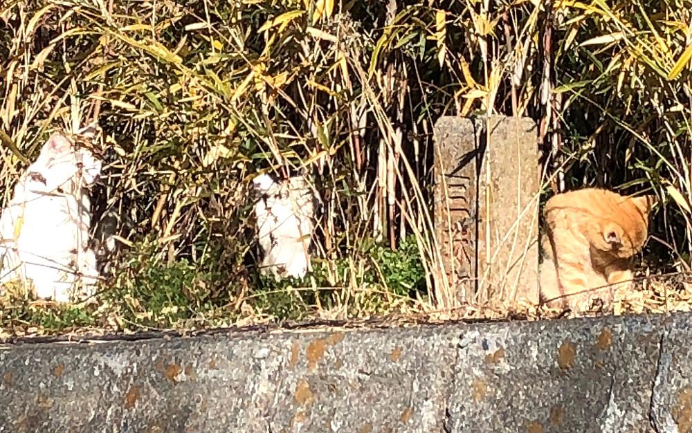 日向ぼっこする半分野良の猫ちゃん、3匹。インテリアコーディネーターのブログ
