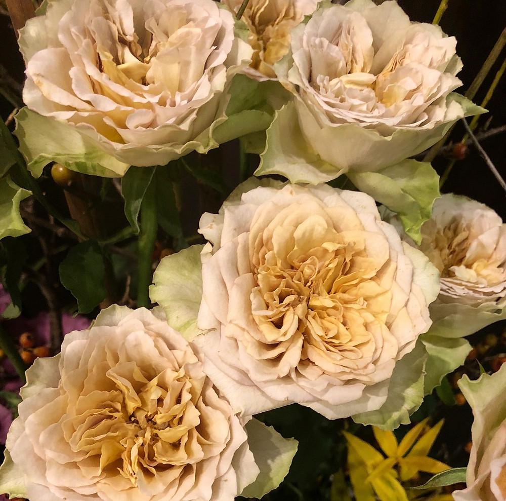 ベージュの薔薇。エールドールのパーティーにて。インテリアコーディネーターのブログ。
