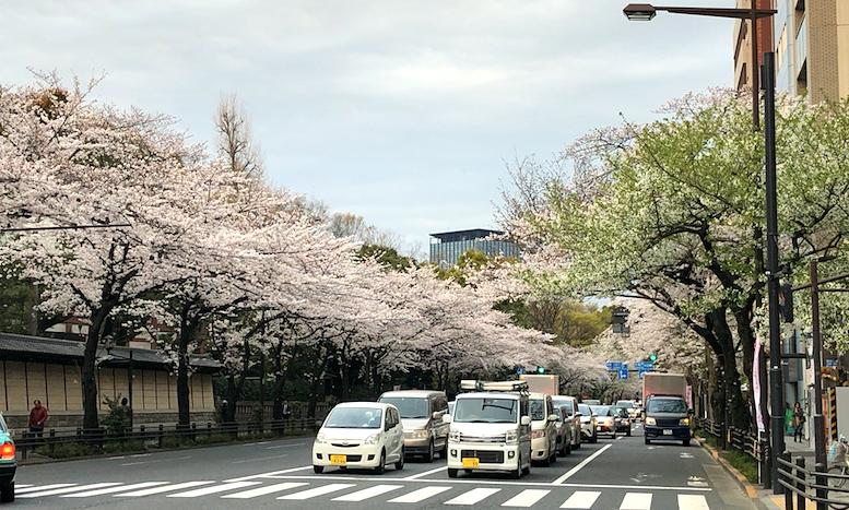 桜が満開の靖国通り沿いにある一口坂ギャラリーで、金継ぎの展覧会開催。インテリアコーディネーターのブログ
