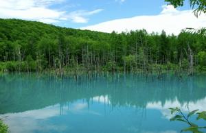 北海道 美瑛の青い池 旭川のADWから。インテリアコーディネーターのブログ。