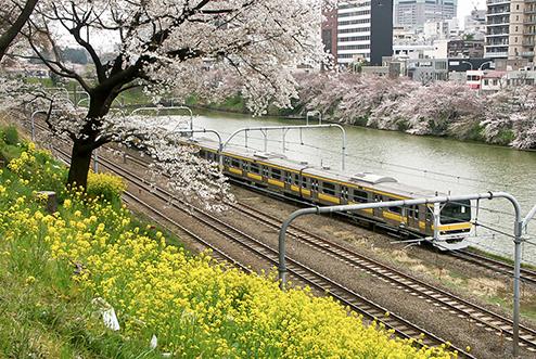 外堀公園からは桜と電車が楽しめます。九段下から市ヶ谷へのグルメと桜情報