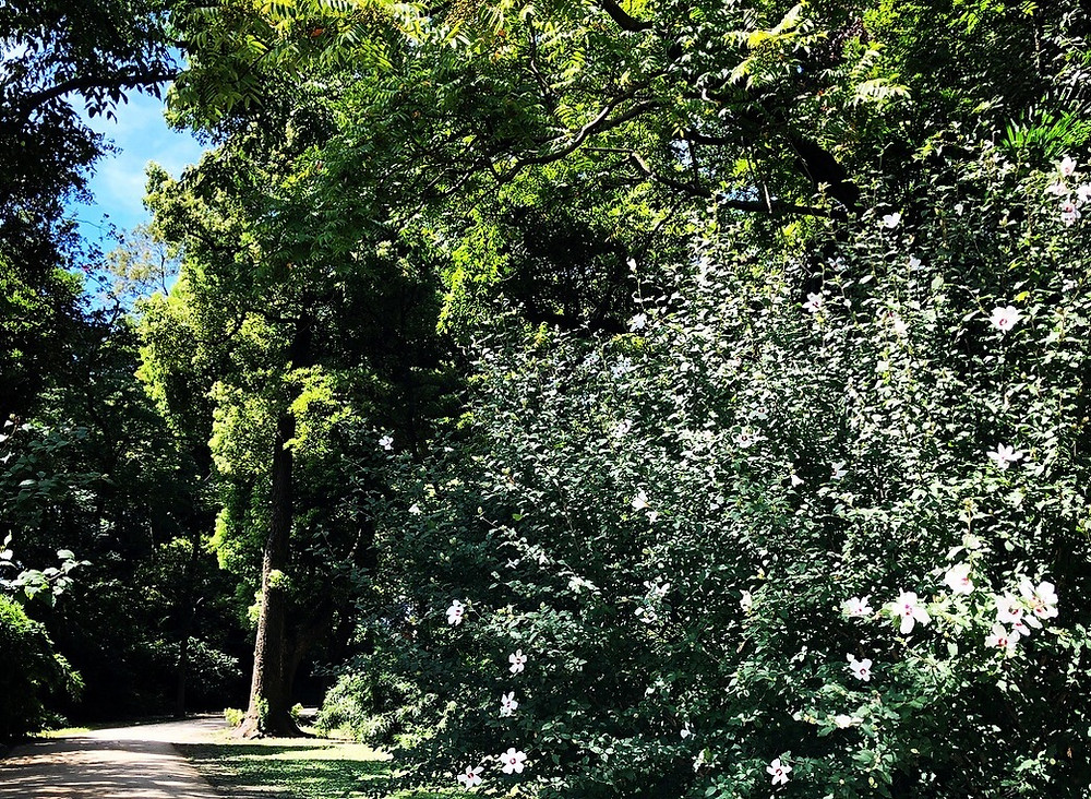 浜離宮の夏の花の日本庭園 建築散歩 緑の庭