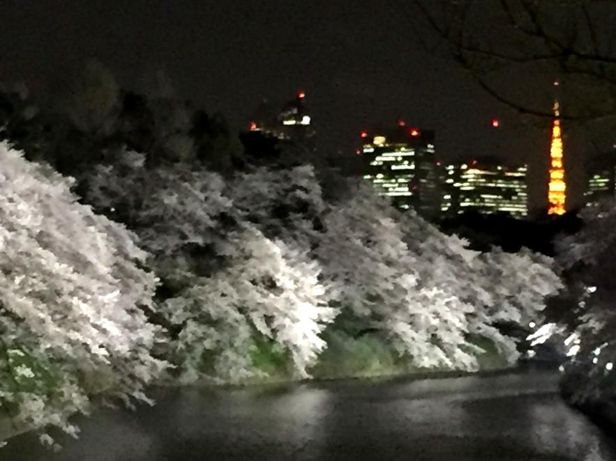 千鳥ヶ淵の桜のライトアップ。東京タワーとともに。インテリアコーディネーターのブログ