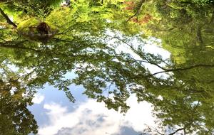 根津美術館の庭園。池の水面に映る青空ともみじ。インテリアコーディネーターのブログ