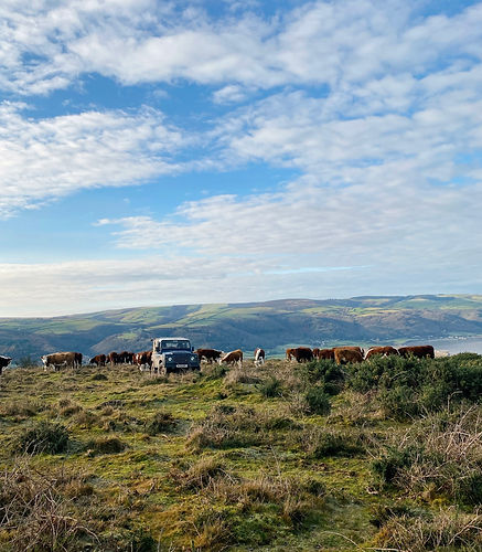 Exmoor National Park.jpg