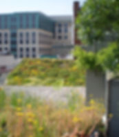 Green roof in Washington DC