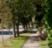 Sidewalk Tree Plantigs