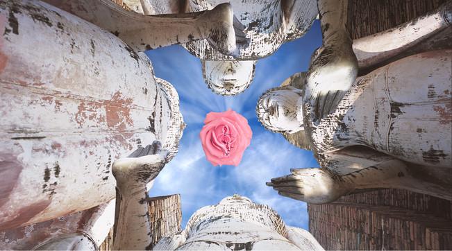 boud-rose.jpg