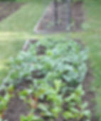 Communty Vegetable garden