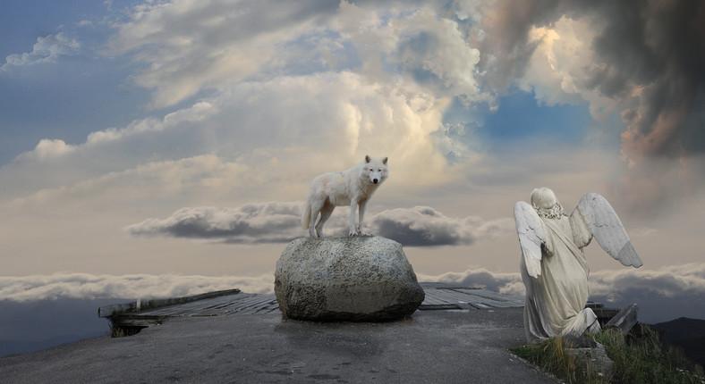 LoupAnge-blanc.jpg