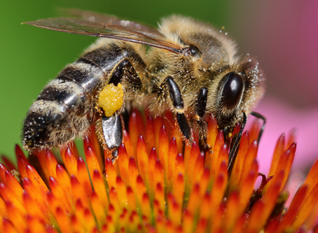 NEW FLYER: How 5G Could Harm Pollinators & Insects