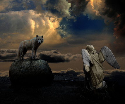 Chayan Khoi photographe Loup Ange-blanc