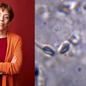 Will a Lack of Sperm Finish Off the Human Race? with Dr. Shanna Swan