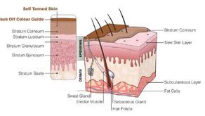The science behind self tan