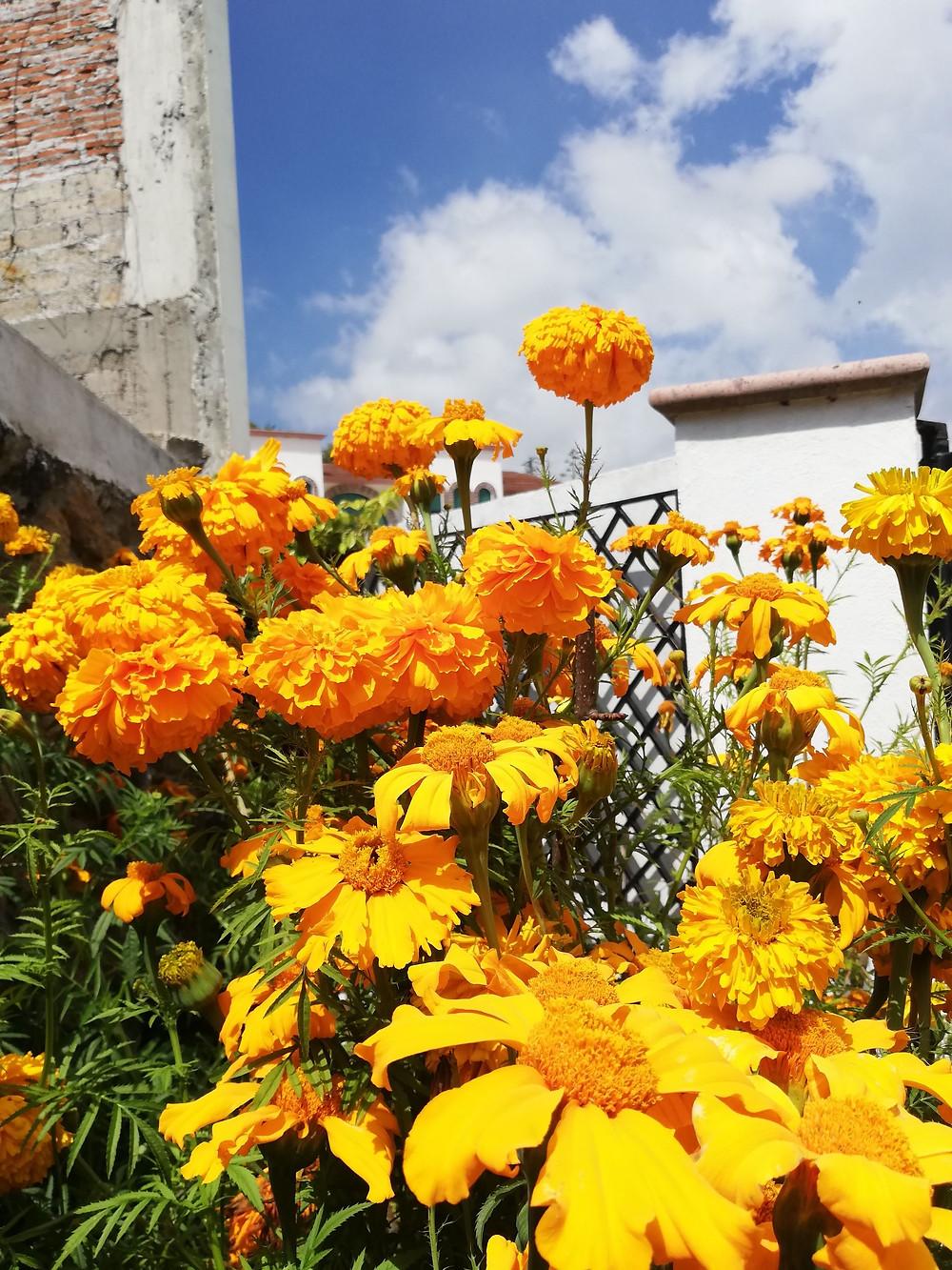 """Veinte flor"""