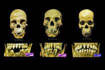SkullThumb.jpg