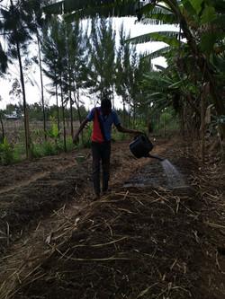 farm irrigation onion farming