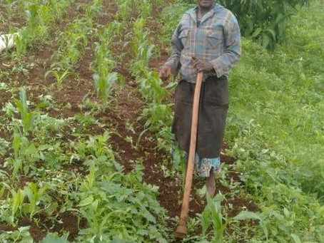 Women empowerment and the role of women in food security