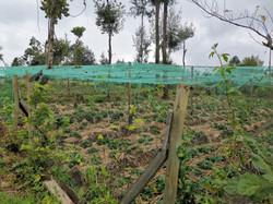 Strawberry Farming Initiative