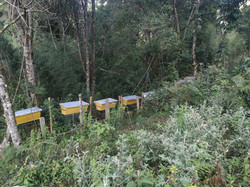 bee hives kabartile