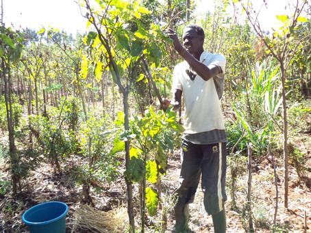 Being a Rural Farmer in Africa (Kenya)