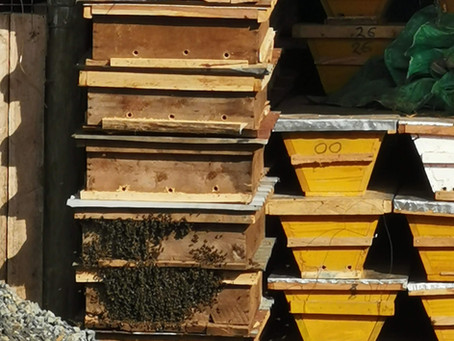 Bee keeping; Good for you and the environment