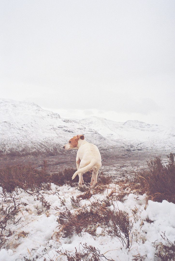 Cold Dog, Loch Maree