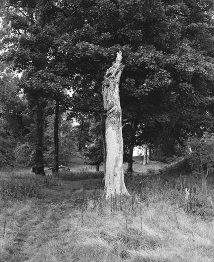 Tree trunk, West Island Way