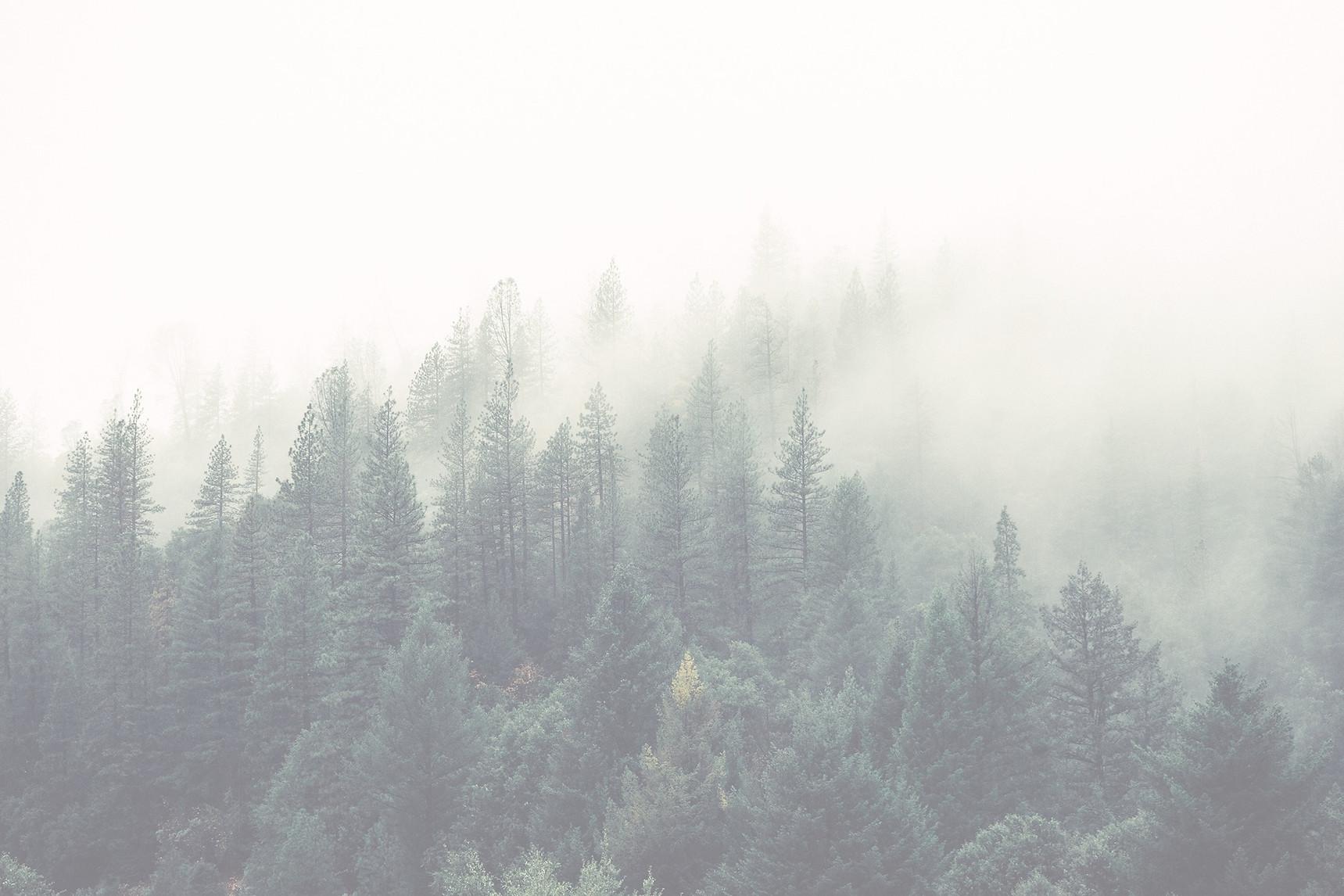Misty%20shroud%20over%20a%20forest_edite
