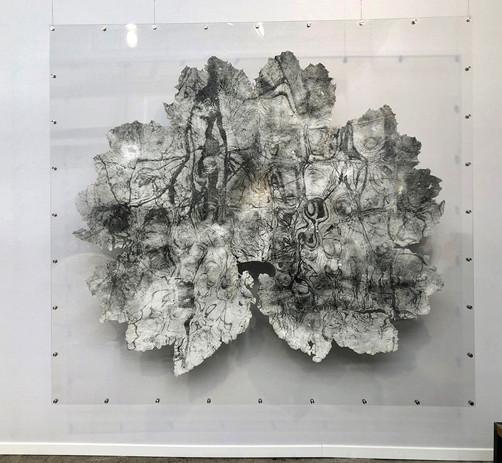 Gunnera leaves - exhibition 1.jpg