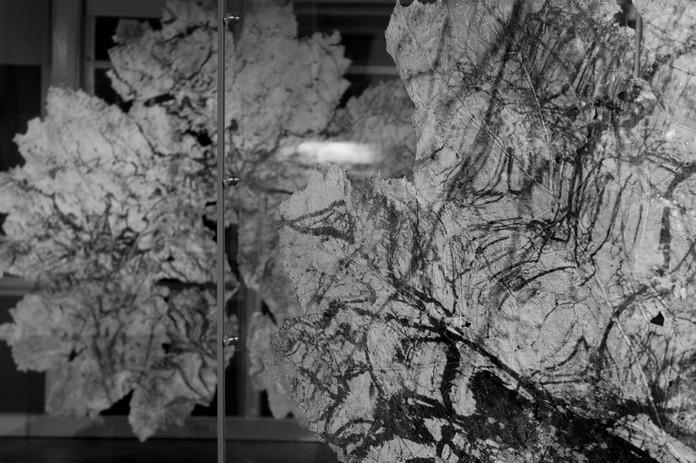 Gunnera leaves - exhibition 5.jpg
