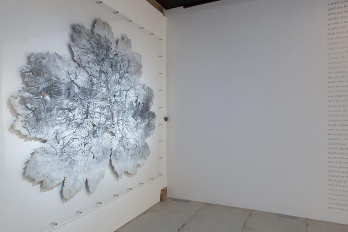 Gunnera leaves - exhibition 9.jpg