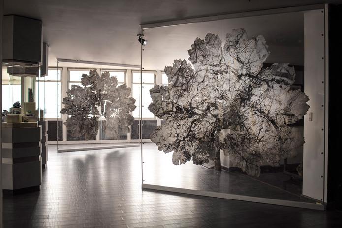 Gunnera leaves - exhibition 4.jpg
