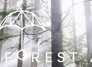 Rainforest Arts - Chemanius BC