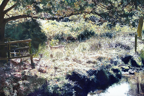 Bradgate Park - Deer