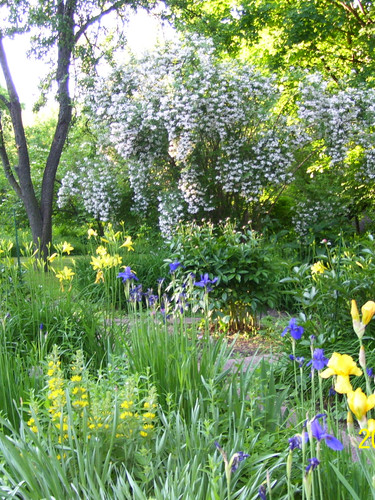 Our garden in May