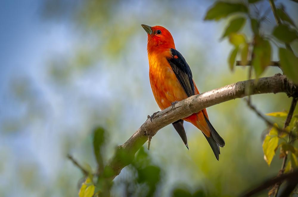 לעשות פוקוס על הציפור, ולהשאיר את הרקע מטושטש