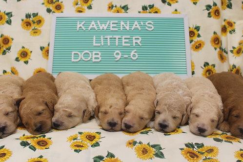 Kawena's Litter